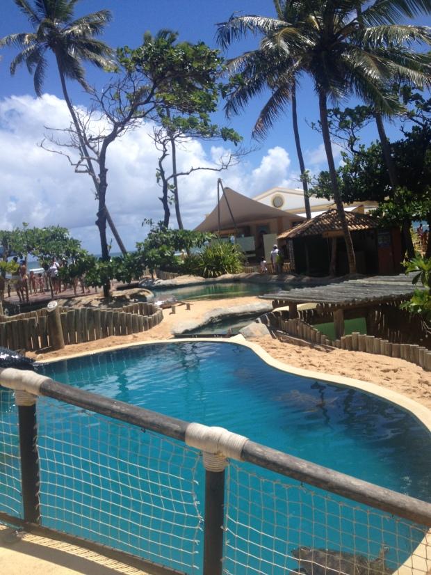 """""""Resort"""" de tartarugas"""
